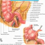 anatomie 150x150 E Learning für Mediziner