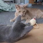 2005 383 150x150 Mit Katzen nach Neuseeland auswandern