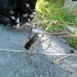 p1070749 150x150 Mit Katzen nach Neuseeland auswandern