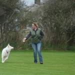 schutzhund action 150x150 Schutzhund Training in Neuseeland