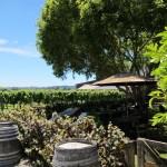IMG 2445 150x150 Wein trinken in Napier
